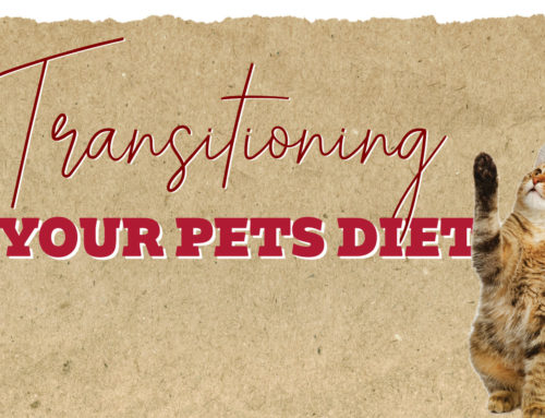Tips & Tricks to Transition Your Pet's Diet!