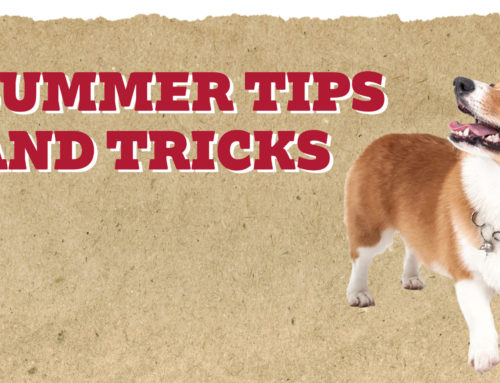 Summer Tips & Tricks, Plus Risks & What to Watch For!